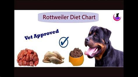 rottweiler puppy food chart goldenacresdogscom
