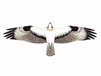 Osprey Birdguides Title Western