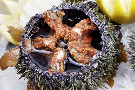 oursin cuisine les oursins ce plat méconnu fish fiches