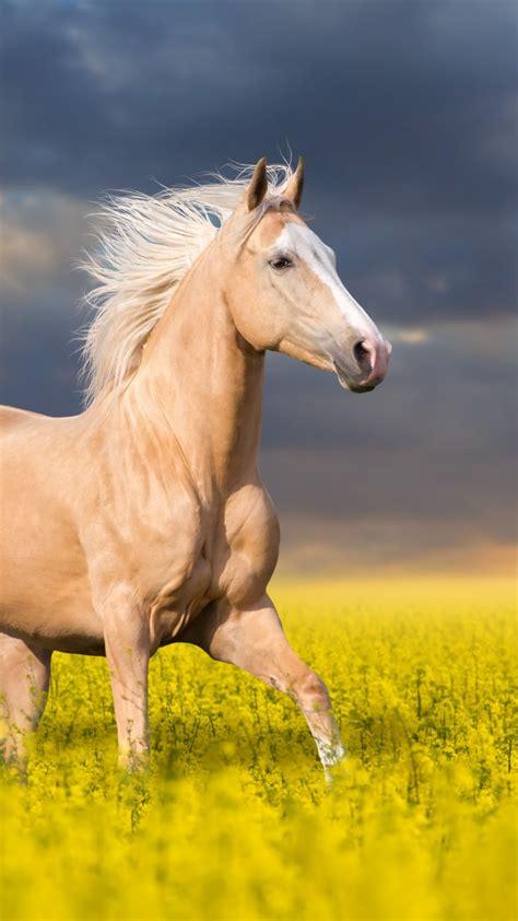 wallpaper horse cute animals  animals