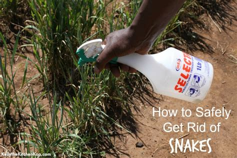how to get rid of garden snakes snake repellent