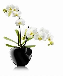 Pot À Réserve D Eau : pot de fleurs pour orchid e avec r serve d 39 eau noir ~ Louise-bijoux.com Idées de Décoration