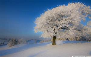 Beautiful_winter_landscape Wallpaper, Free Desktop ...