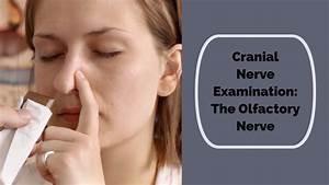 1st Cranial Nerve- Olfactory