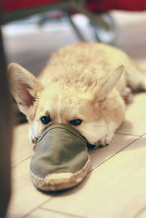 cute    platypus dog  bright   day