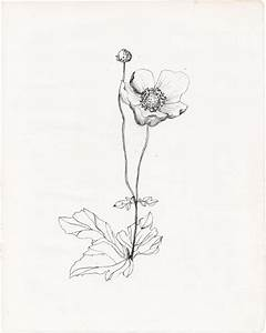 wildflower drawing | Tumblr | Drawing | Pinterest ...