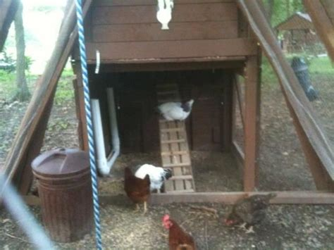 building  chicken coop    wooden playset