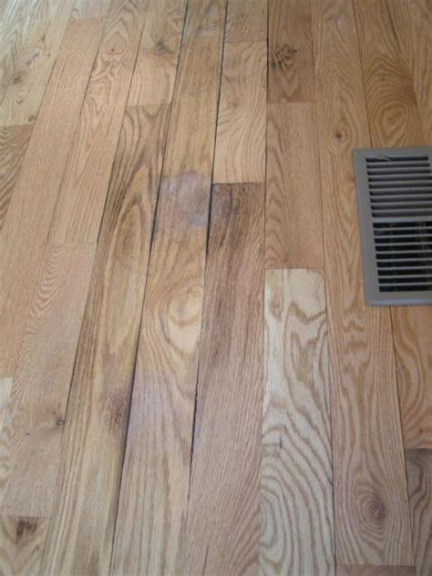 hardwood floors hurt hardwood damaged by water images