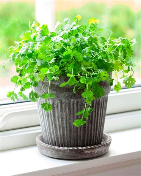 spices herbs indoors grow plant