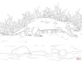 Northern River Otter Coloring Page Free Printable