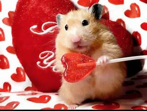 30 best images about Hamster Love! on Pinterest | Carrots ...