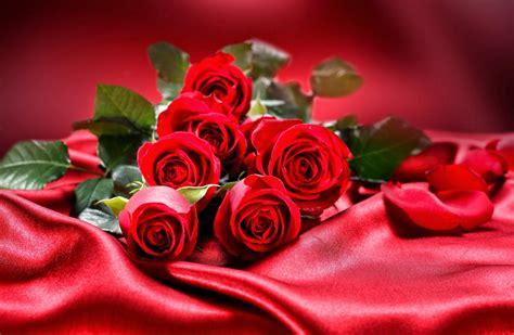 rosas imagenes de amor  movimiento frases romanticas de amor