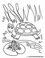 Pond Coloring Pages Frog Drawing Turtle Lily Pad Fish Sheet Printable Habitat Print Sea Drawings Preschoolers Getdrawings Getcolorings Animals Sit sketch template