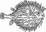 Blowfish clip art - vector clip art online, royalty free ...