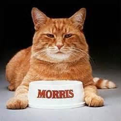 morris the cat studious metsimus i m keith hernandez happy birthday to me