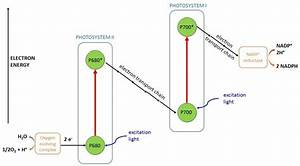 32 Photosystem 1 And 2 Diagram