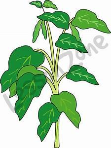 Bean Plant Clipart