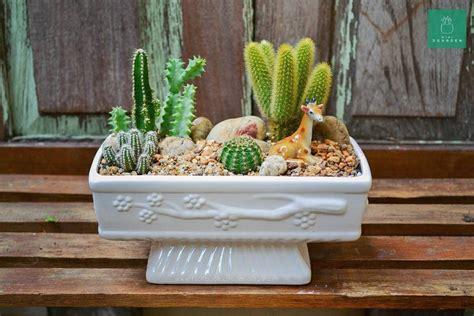#mini3garden #succulents #cactus #Haworthia #thailand # ...