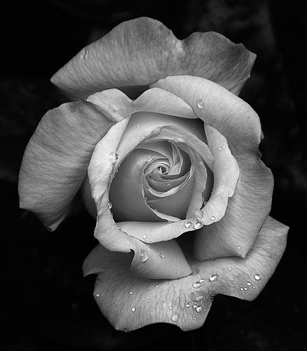Black And White Experiment Copy  Stuart Moulder  Flickr