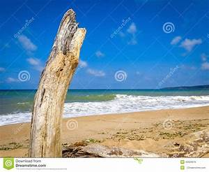 Achat Tronc Arbre Decoratif : ciel ensoleill bleu d 39 arbre de tronc de mer de plage de ~ Zukunftsfamilie.com Idées de Décoration