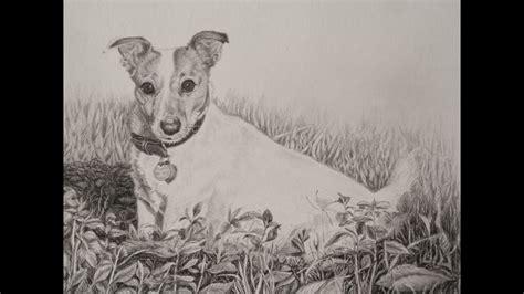 tobie  jack russell terrier  pencil method graphite