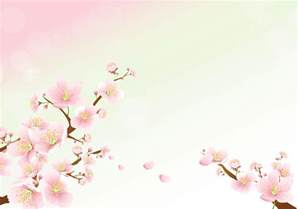 Cherry Blossoms as Background