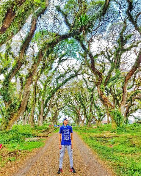 Fauna hutan mangrove nguling ada empat belas spesies yang terdiri dari bandeng, belanak. Hutan de Djawatan Benculuk awalnya terdapat bangunan yang digunakan sebagai tempat pengelolaan ...