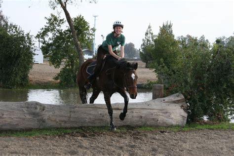 horse quarter cross bay country eventing horsestockphotos deviantart