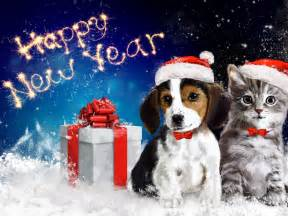 Christmas Kitten and Puppy Surprise - Kids Opening ...