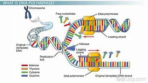 template definition biology - chapter 8 3 dna replication pp 235 238 mr pereira 39 s
