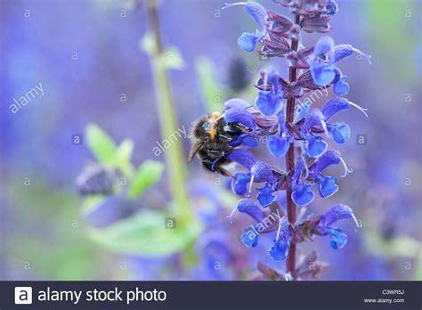 Englischer Garten Drohne by Best 228 Ubende Insekten Stockfotos Best 228 Ubende Insekten