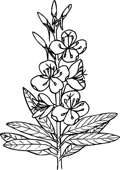fire weed clipart clipground