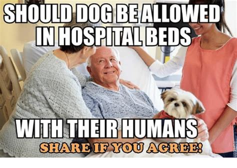 25+ Best Memes About Hospital Bed