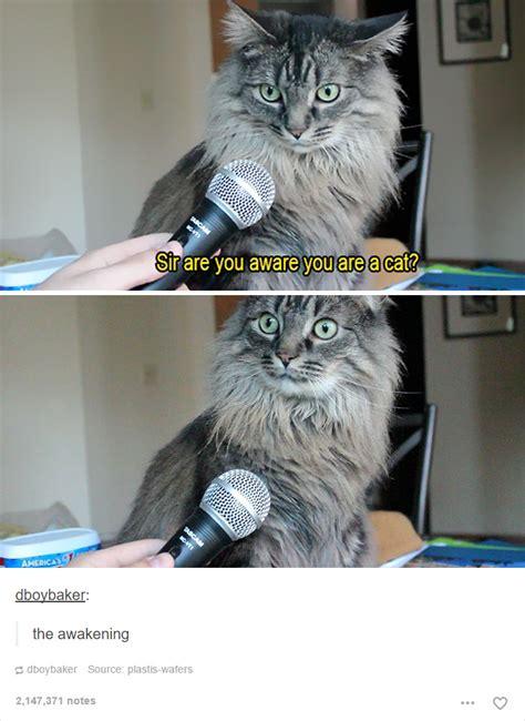 cat posts  tumblr   impossible   laugh