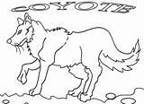 Coyote Coloring Pages Printable Jackal Getcolorings Cartoon Cool2bkids Getcoloringpages sketch template