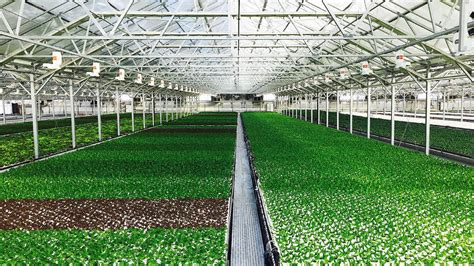 Best Greenhouses by This Is The World S Largest Rooftop Greenhouse