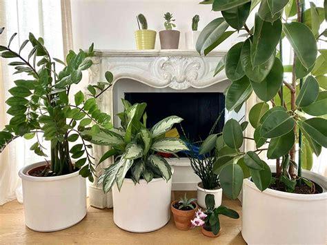 Le ricerche scientifiche sulla capacità delle piante da interni di purificare l'aria non lasciano spazio ad piante da appartamento e da interno per il 2020, piante grasse, verdi o carnivore per arredare della casa. Piante d'appartamento: 7 delle più resistenti in casa | ti ...