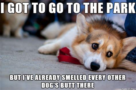 Dog Problems Meme - introducing first world dog problems meme guy