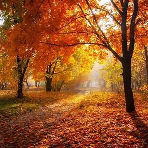 Alternative, Uses, For, Autumn, Leaves