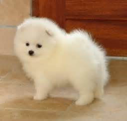 small dog breeds that don t shed my favorite cute