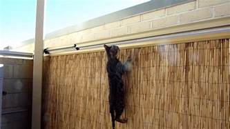 cat proof fence cat proof fence