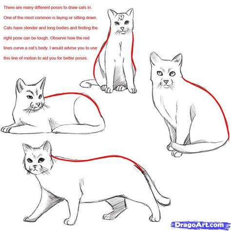 draw  realistic cat draw real cat step  step drawing
