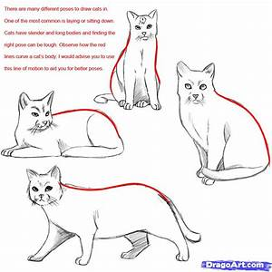 How to Draw a Realistic Cat, Draw Real Cat, Step by Step ...