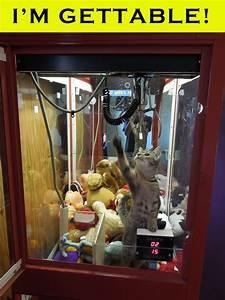 Cat In Claw Machine Picture EBaum39s World
