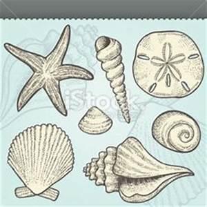 Shell Clip Art Black and White | sea shell clipart shells ...