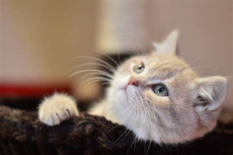 stock photo  animal cat cute