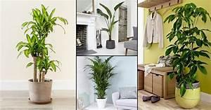 22, Best, Large, Indoor, Plants