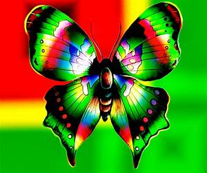 Colorful Butterfly Backgrounds 6 Cool Hd Wallpaper ...