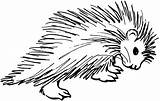 Porcupine Coloring Pages Clipart Clip Cliparts Drawing Porcupines Animals Cartoon Drawings Colouring Printable Animal Fish Library African Cartoons Prickled Crested sketch template
