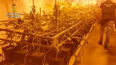 Localizan una plantación de marihuana en Arrecife | Canarias7